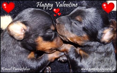 14.02.2014   Wir Wünschen Einen Schönen Valentinstag!